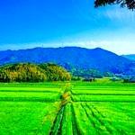 田舎の土地を所有している方向けの土地活用ランキングBEST5