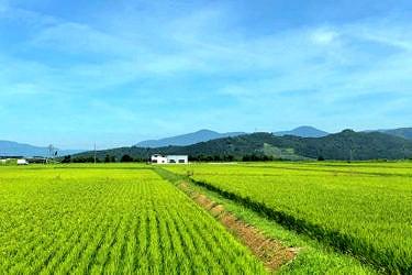 遊休農地とは? 荒廃農地や耕作放棄地との違いや活用方法
