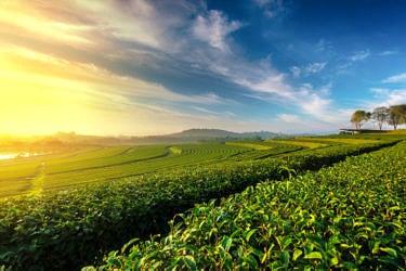生産緑地問題(2022年問題)とは?どんな影響がある?|対処法まで詳しく解説